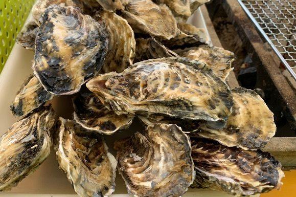 山盛りの牡蠣